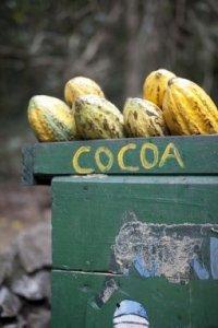 cocoaklein