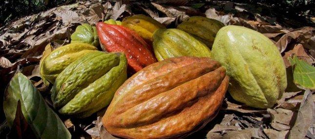 cacaoperuano