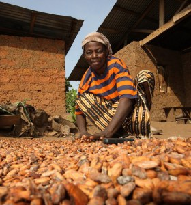 Women farmer drying cocoa beans