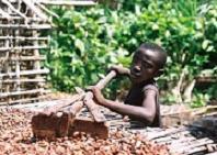 Boy raking cocoa