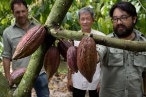 cacao-boom-met-peulen-marou-vietnam-300x200