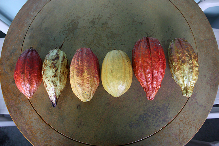 Image-2-fruit-variation