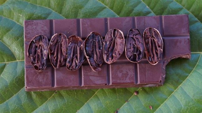 o-chocolate_images_institucional_fazenda_thumb_medium900_0
