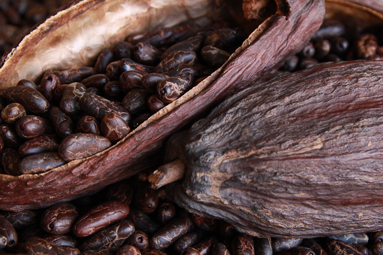 Roasted_Cocoa_Beans_And_Pods__51995_zoom