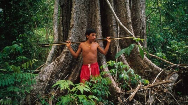 CroppedFocusedImageWzkyMCw1MTcuNSwieSIsNDhd-WWF-amazonie-amazonegebied-gallery2